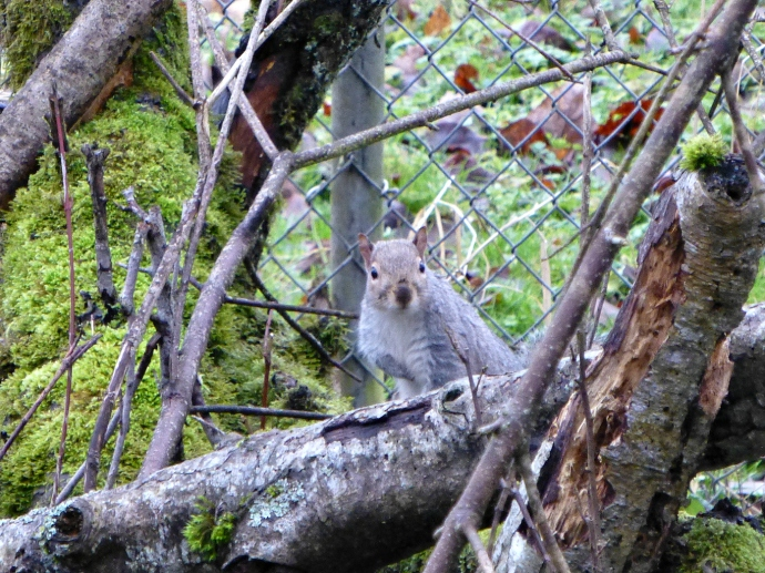 2013 01 29 Squirrel 1