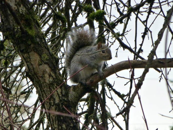 2013 01 29 Squirrel 2