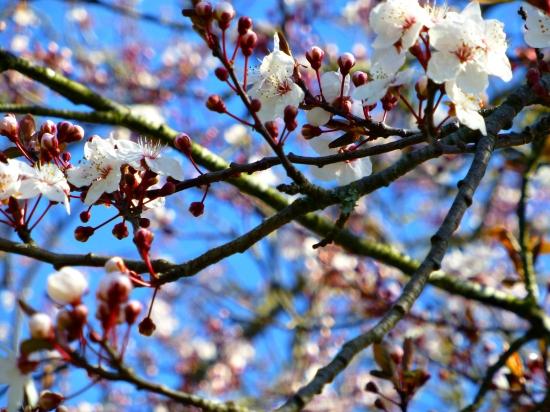 2013 03 18 Spring 01