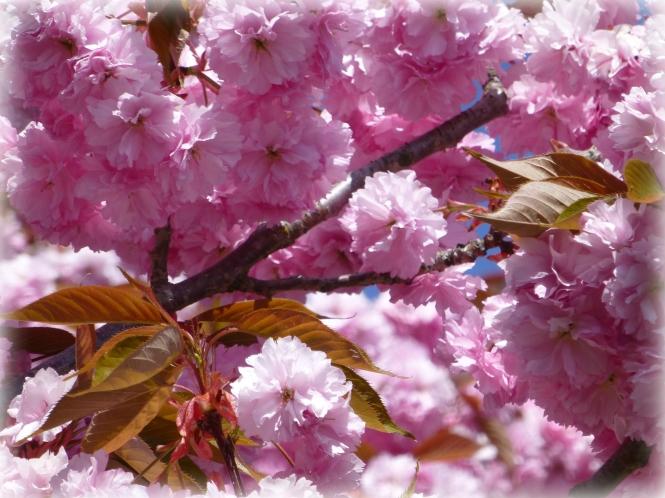2013 04 25 flowers 2