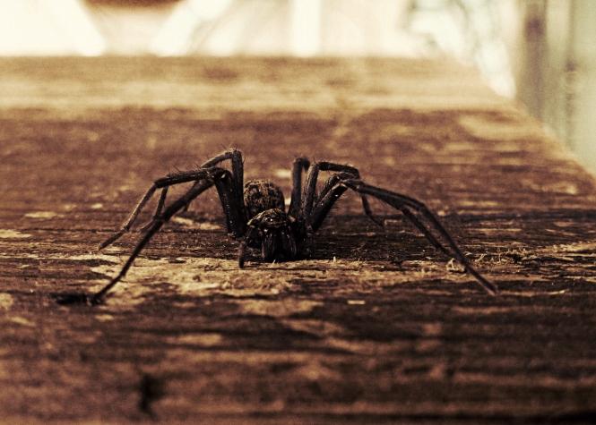 2013 10 31 Spider Zombie
