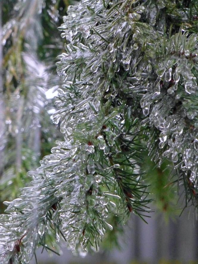 pm2014 03 2 Ice storm 4