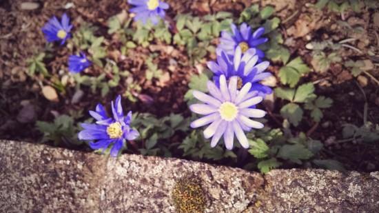 2015 03 05 Spring (1)