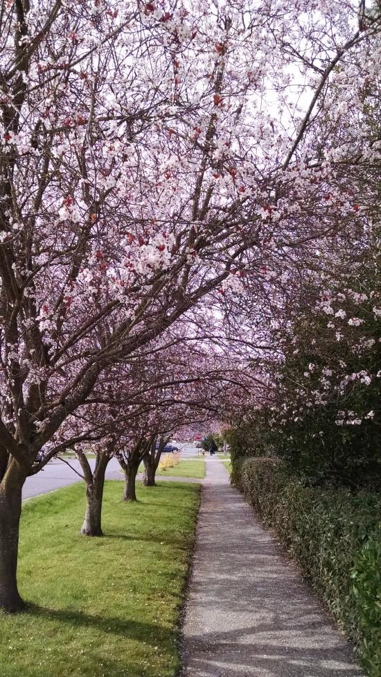 2015 03 05 Spring (3)