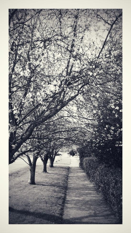 2015 03 05 Spring (4)