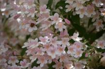 2016 05 08 Flowers (6)