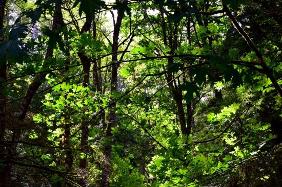 pm2016 08 21 Baker Preserve Hike (20)