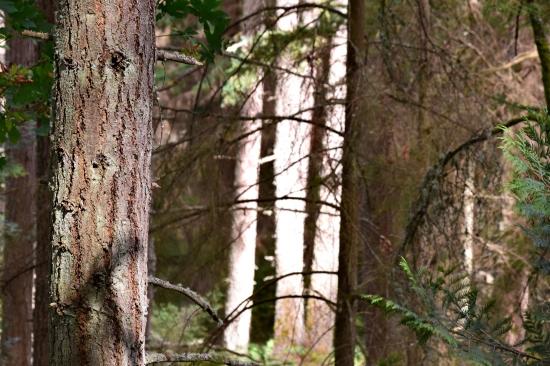 pm2016 08 21 Baker Preserve Hike (36)